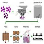 Typical Red Wine Makin process 160